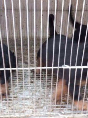 روت وایلر فروش حیوانات ، درمان بیماری ، آموزش و تربیت حیوانات خانگی آمازون