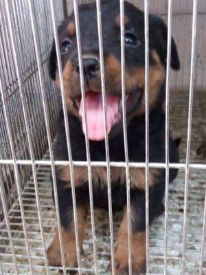 فروش حیوانات ، درمان بیماری ، آموزش و تربیت حیوانات خانگی آمازون