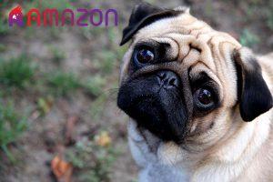 کامل ترین معرفی نژاد سگ پاک