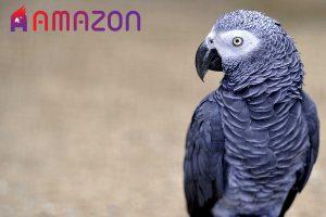 علل بیماری کلیوی در پرندگان