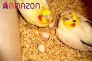 دلیل بی نطفه بودن تخم پرندگان