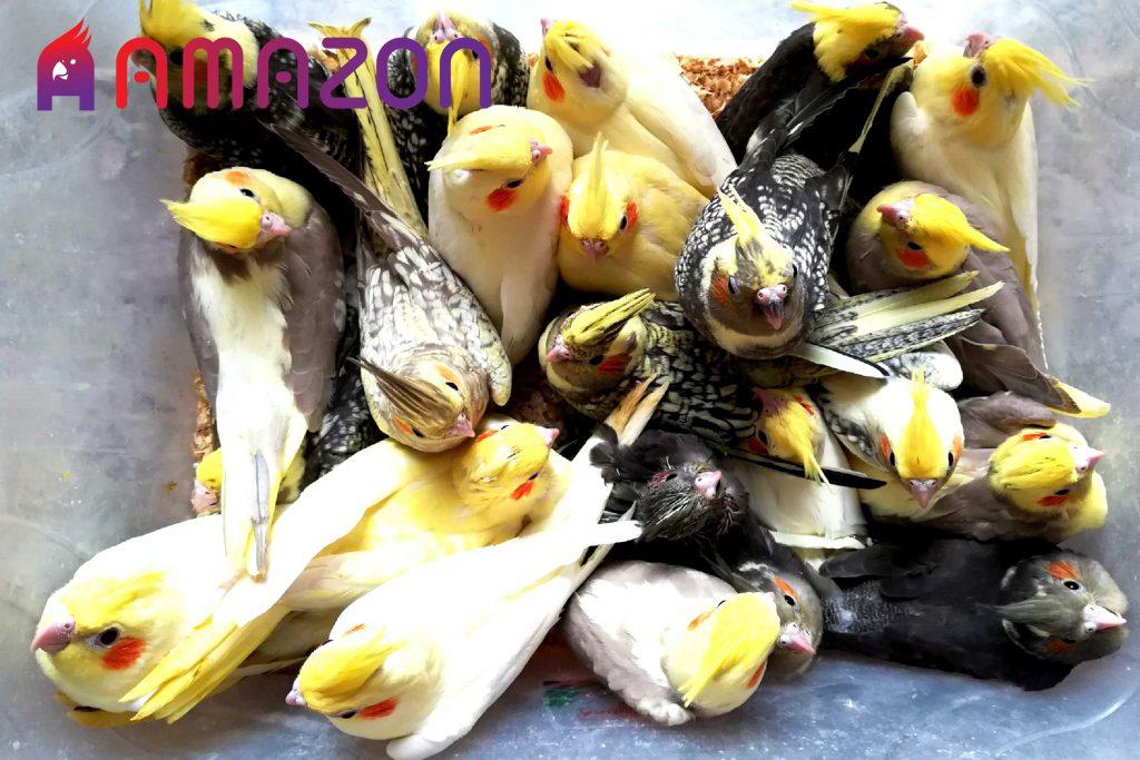 سن تقریبی دونخور شدن پرندگان مختلف
