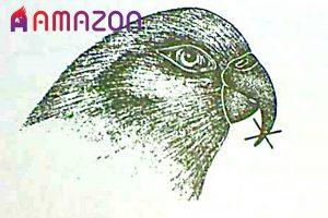 کوتاه کردن ناخن و منقار پرندگان