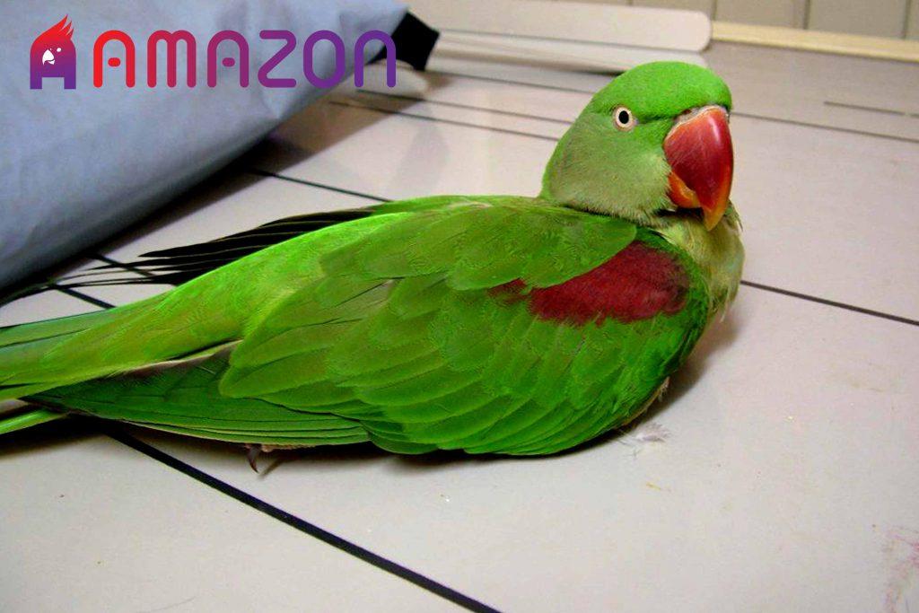 علل سرگیجه در پرندگان